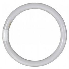 Tubo Iluminacion Fluorescente Circular 32W 6500 K Garza