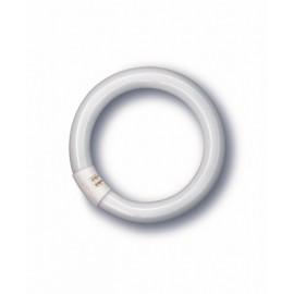 Tubo Iluminacion Fluorescente Trifosforo Circular 32W 6500 K Osram
